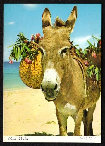 1980s JAMAICA - Native Donkey - Unused Postcard
