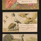 1883 Victorian Trade Cards (3) - BURDETT ORGAN CO. - Erie, Pennsylvania - turkey