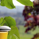 NEW! Koubachi Wi-Fi Plant Sensor-Outdoors