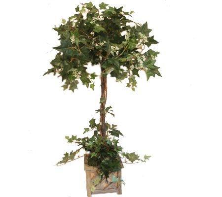 Grande Ivy Topiary