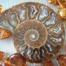 Amber Flakes with Fossil Ammonite