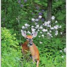 White-Tail Deer #1 Summer Boxed Notecard Set
