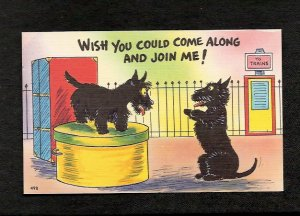 Vintage Comical Puppies WISH YOU COULD COME Along and Join Me Comic Puppy Unused Linen Postcard