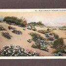 Vintage Postcard Wild Flowers on the Desert, California Unused Postcards
