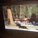 Giant Forest Village Located in Sequoia National Park 1984 B12135 McKinney Sculpted Color Photo Post