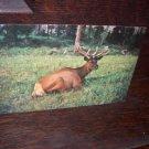 Custer National Monument Starkey Trading Post LaGrande Oregon Vintage Unused Postcard