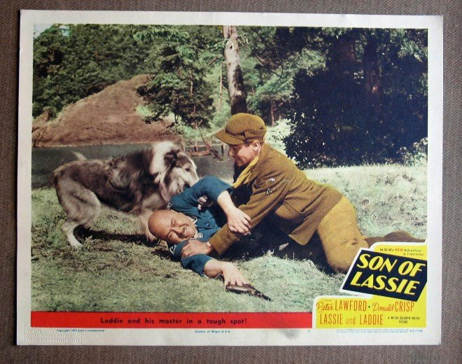 CH42 Son Of Lassie PETER LAWFORD and LADDIE 1945 original lobby card