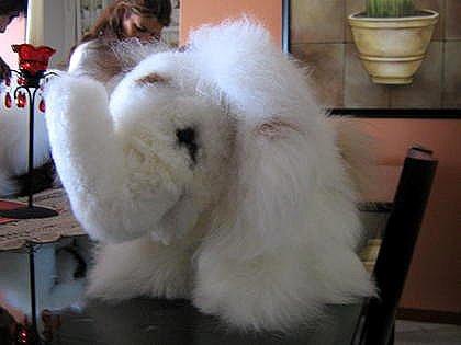Elephant,handmade of Alpaca fur, soft toy