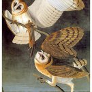 "Audubon ""Barn Owl"" HUGE Art Print Audubon Edition"