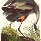"John James Audubon ""Great Blue Heron"" Art Print"