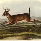 "John James Audubon ""White-Tailed Deer Male"" Art Print"