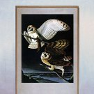 "John James Audubon ""Barn Owl"" Beautiful Art Print"