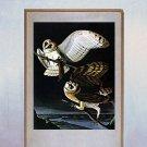 """John James Audubon """"Barn Owl"""" Beautiful Art Print"""