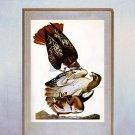 "John James Audubon ""Red-Tailed Hawk"" Art Print"