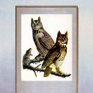 "John James Audubon ""Great Horned Owl"" Art Print"