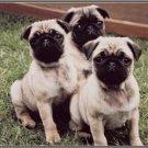 LP-2177 Pug Dog Pet Novelty License Plate