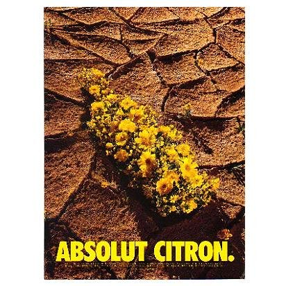 ABSOLUT CITRON Vodka Magazine Ad DESERT FLOWERS