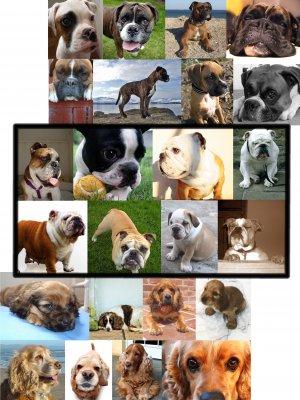 Choose DOG Boxer BuLLdog CoCKeR sPaniel MAGNET