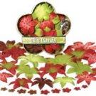 Petaloo - Dahlia Box Blend Sm - Red/Green