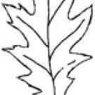 Impression-Obsession - Pointy Oak Leaf