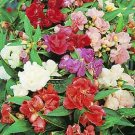 Balsam Impatiens Touch-me-not mixed colors 50 seeds
