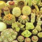BULK Cactus cacti variety mix 50 seeds