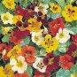 BULK - NASTURTIUM JEWEL OF AFRICA MIX flowers to eat 1000 seeds