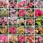 PLUMERIA Frangipani rubra mix all colors 10 seeds