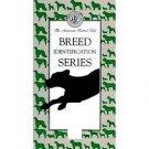 Breed Identification Series: Hound Group (Volume 2)