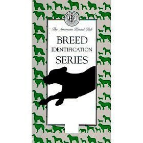 Breed Identification Series: Herding Group (Volume 7) by The American Kennel Club
