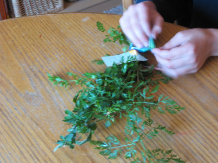 Herbs for Kids: Book One