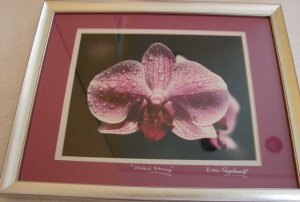 Eric Popplewell Orchid String Photo