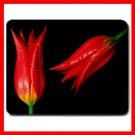 Flowers Red Hot Tulips Mouse Pad MousePad Mat 139