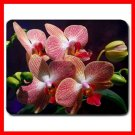 Flowers Orchids Flower Hobby Mouse Pad MousePad Mat 140