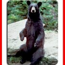 Black Bear Wild Animal Hobby Mouse Pad MousePad Mat 192