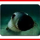 Australian Sea Lion off Adelaide Mouse Mouse Pad MousePad Mat 202