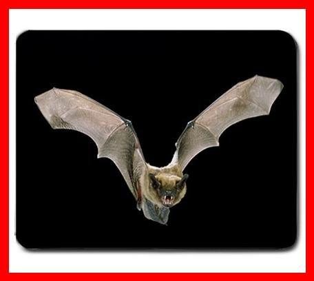 Rare Bat Flying In Dark Hobby Mouse Pad MousePad Mat 233