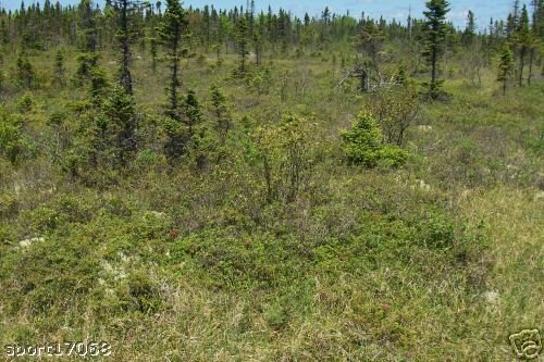 NOVA SCOTIA LAND 2.3 ACRE SOUTHERN TIP NEAR OCEAN BEACH GOLF ADJOINING 2.3 ACRES ALSO AVAILABLE