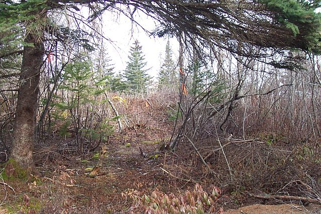 NOVA SCOTIA LAND 107 ACRES SOUTHERN TIP CLOSE TO LAKE & OCEAN POWER CABLE PHONE SUBDIVIDABLE
