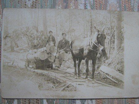 Vintage photo postcard loggers and mule