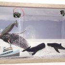 Whale Watching Picture/Photo Frame 8096