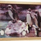 Penguins Picture/Photo Frame 9257