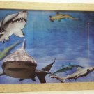 Shark Themed Picture/Photo Frame 9265