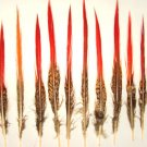 """10 Golden Pheasant Red Tip Feathers 6-8"""" Long"""