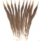 "Golden Pheasant Barred Tail Feathers 12-14"" Pkt of 10"