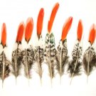 """Lady Amherst Pheasant Feathers Red tip 4-6"""" Pkt of 10"""