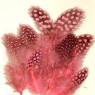 Spotted Guinea hen feathers 1/4 oz packet Body Plummage Pink