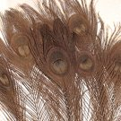 "100 Peacock EYE Feathers BROWN 10-15"" L bleached & dyed"