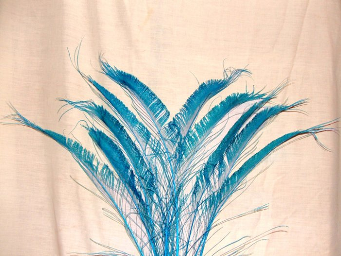 """50 Peacock Sword Feathers Bleached & Dyed TURQUOISE BLUE 20-25"""" L"""