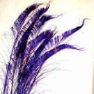"50 Peacock Sword Feathers Bleached & dyed REGAL PURPLE  20-25"" L"